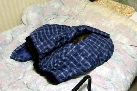 くるまって寝るムギ