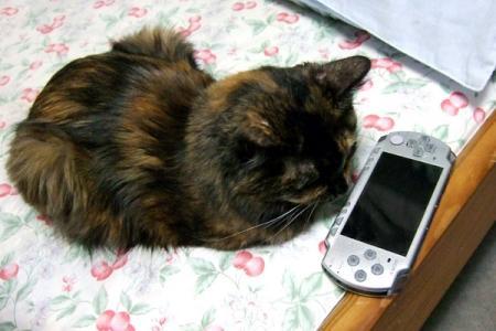 PSPとムギ01