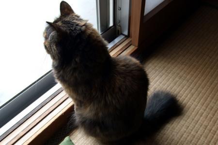 外を真剣に見るムギ