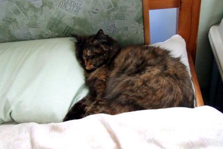枕を使ってねるムギ