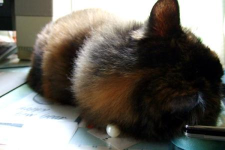 ケータイを枕にするムギ