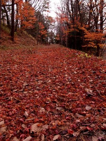 autumnleaves02.jpg