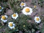 川原のお花