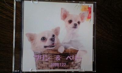 081015伊豆旅行プロ写真CD
