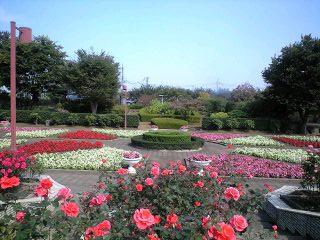 081017智光山実織薔薇
