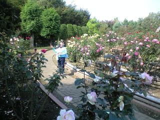 081017智光山実織薔薇庭園