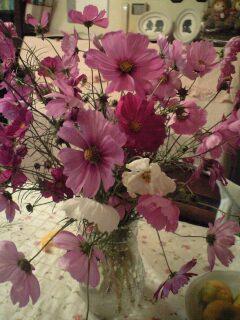 081018花瓶コスモス