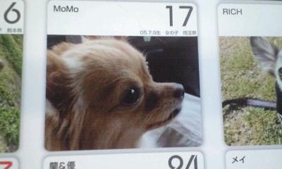 081210カレンダーMoMoちゃん