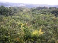 休憩所からの景色