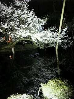 水面に写る桜