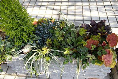 0406-6葉物寄せ植え