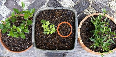 0521-9鉢植え