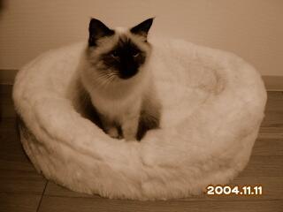 20041111.jpg