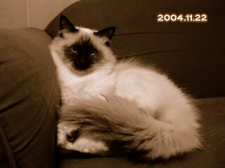 20041122.jpg