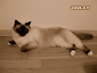 20050311.jpg