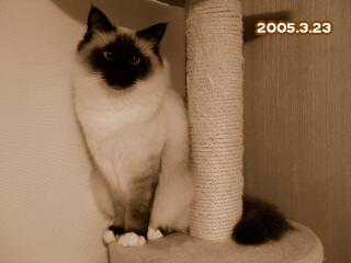 20050323.jpg