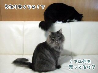 20060103-4.jpg