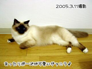 20060309-3.jpg