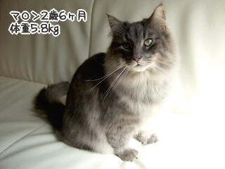 20060315-1.jpg