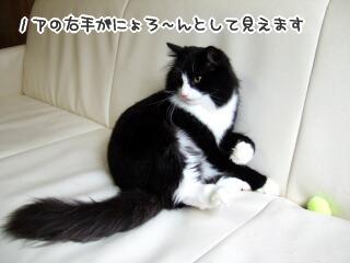 20060411-16.jpg