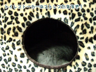 20060416-1.jpg