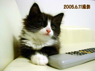20060611-5.jpg