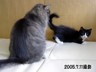 20060711-5.jpg
