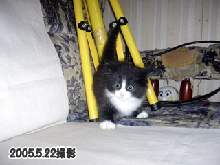 20060718-5.jpg