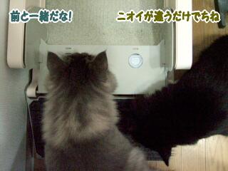 20060806-5.jpg