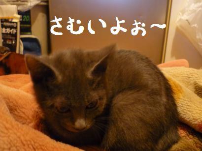 寒がるゆきじ01