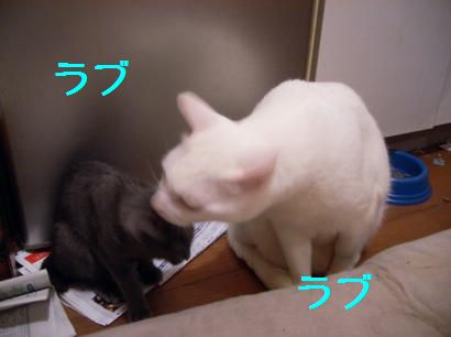 ぶーちゃんとゆきじ01