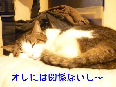 マニー寝てる