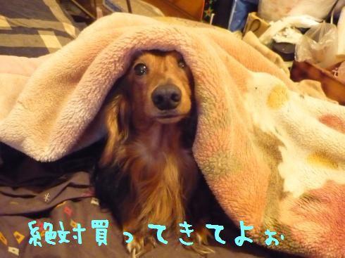 ネスケ毛布