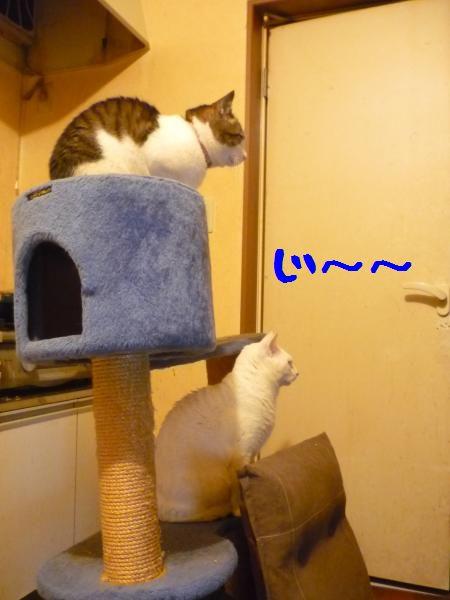猫タワーとまにぶ
