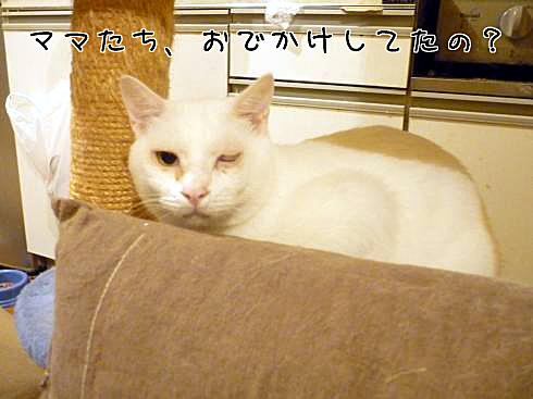 02_ぶーちゃん登場