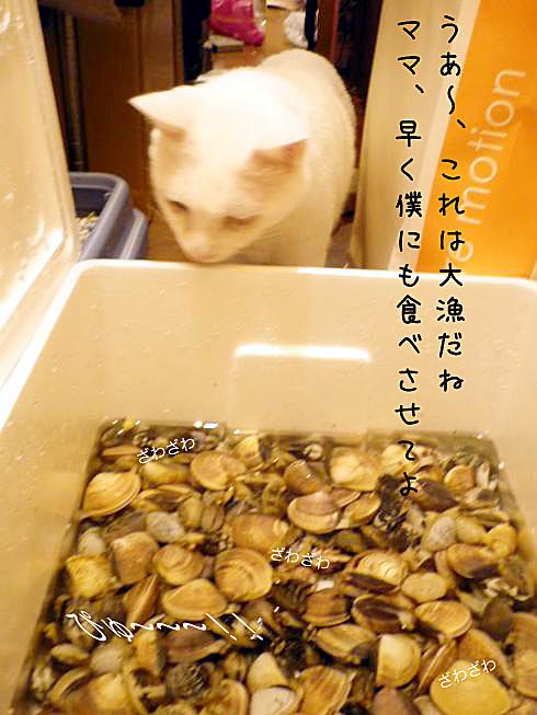 03_ぶーちゃん覗く