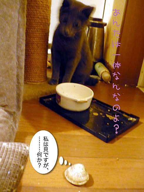 05_ゆきじ身構える