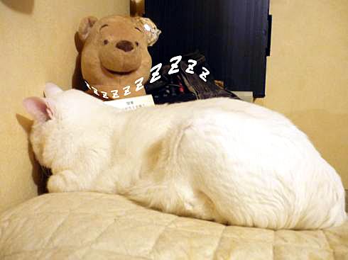 06_ぶーちゃん寝る01