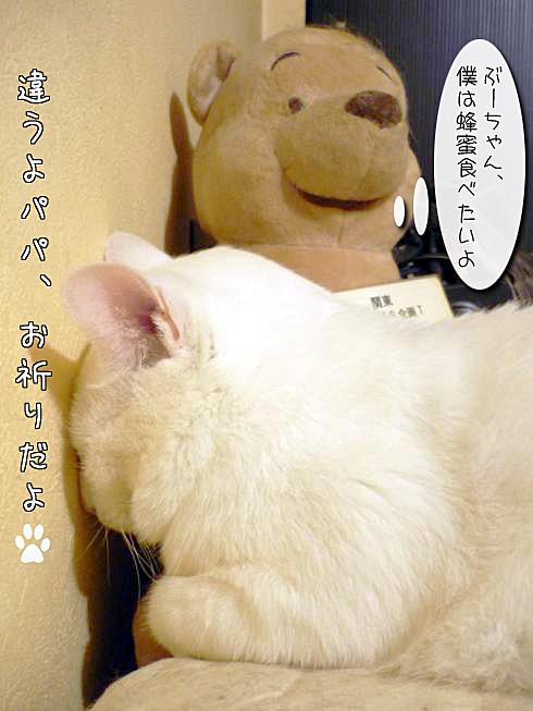 07_ぶーちゃん寝る02