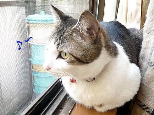 マニー窓辺1