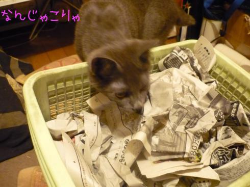 ゆきじと新聞紙1