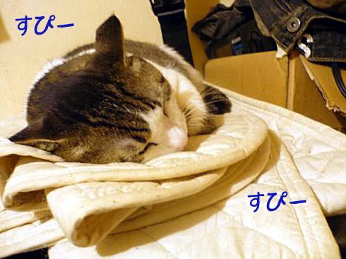 マニー寝る