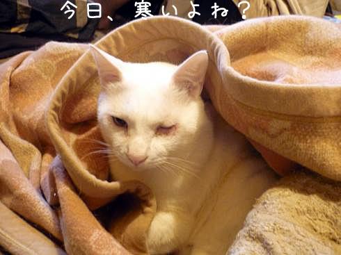 ぶーちゃん布団