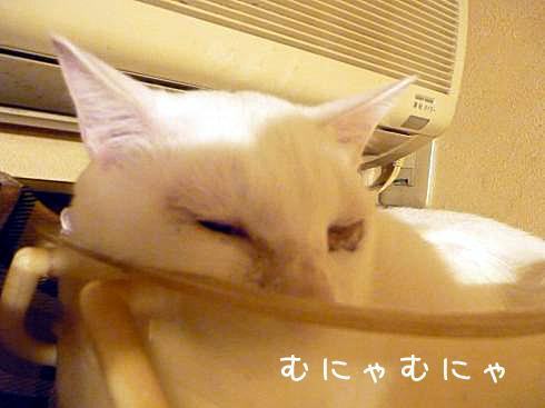寝てるぶーちゃん