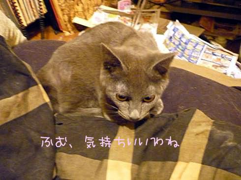 枕ゆきじ1