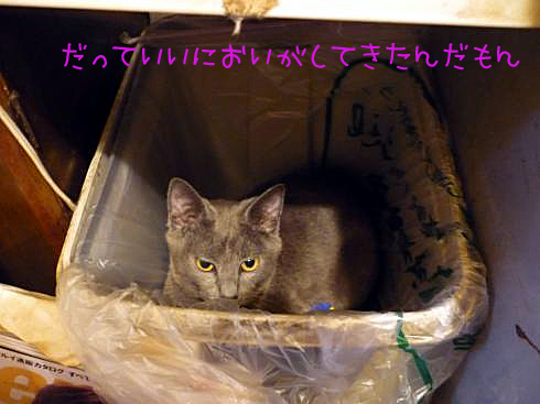ゆきじゴミ箱