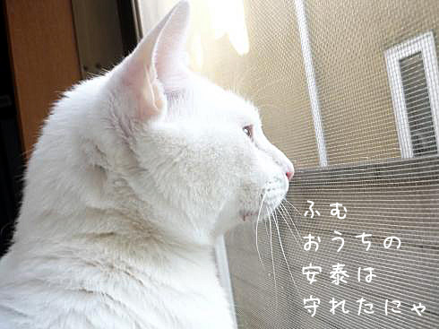 ぶーちゃん