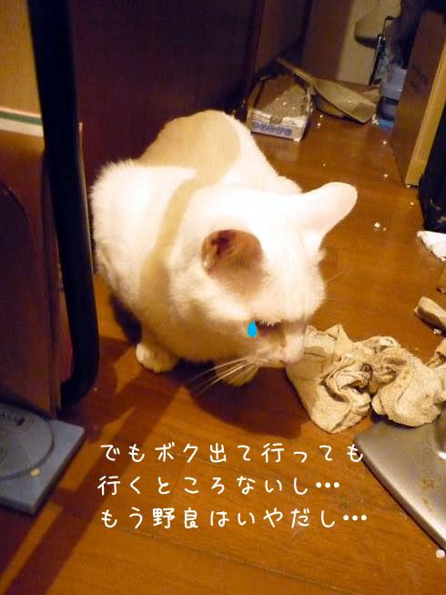 ぶーちゃんの泣き言1
