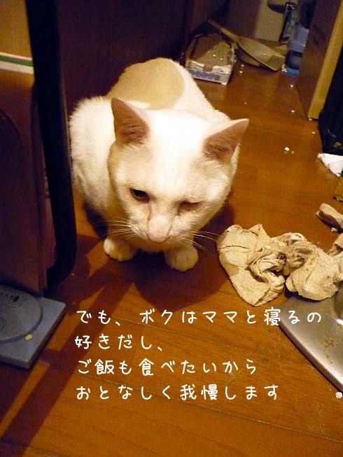 ぶーちゃんの泣き言2
