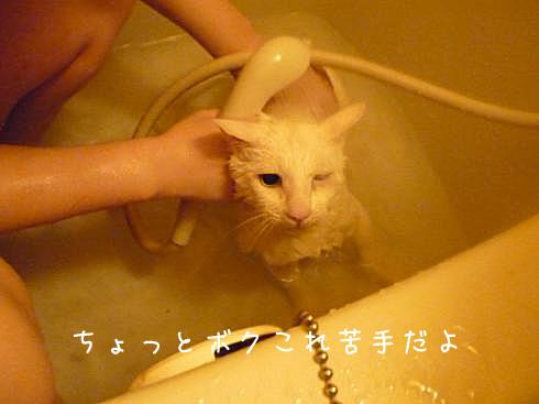 ぶーちゃん風呂1